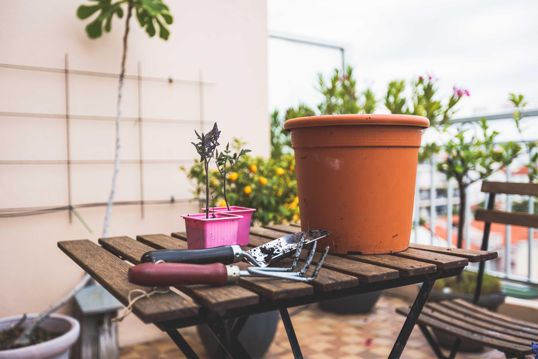 סנסציוני איך ומתי לדשן צמחים באדניות ועציצים RR-97