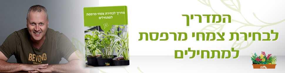 באנר מדריך צמחי מרפסת למתחילים